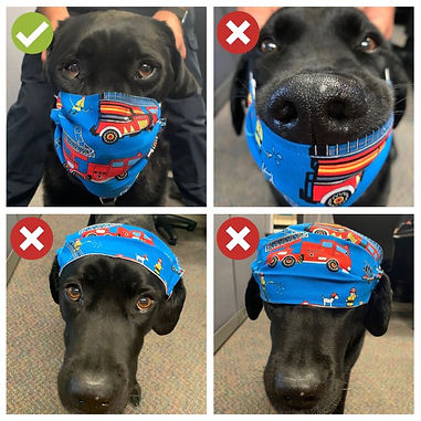 How-to-wear-a-face-mask-by-Tessa-the-Fresno-Fire-dog.jpg