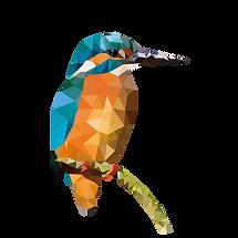 profielfoto ijsvogel-03.png