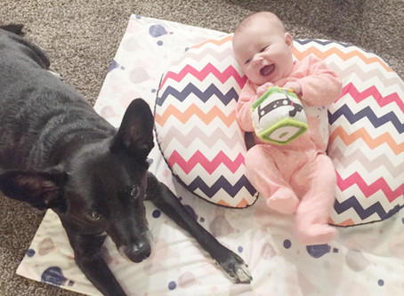 Expert Advice: Introducing Your Baby & Dog