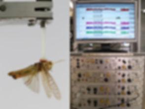Locust and polygraph.jpg