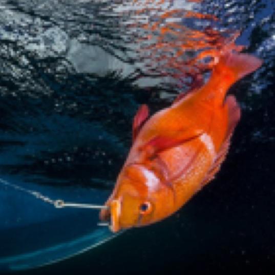 Murray Duncan Linefish.png