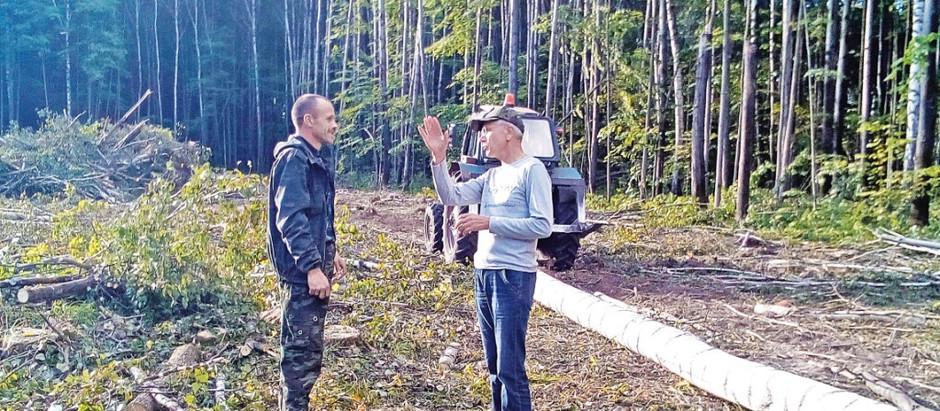 20 сентября – День работников леса