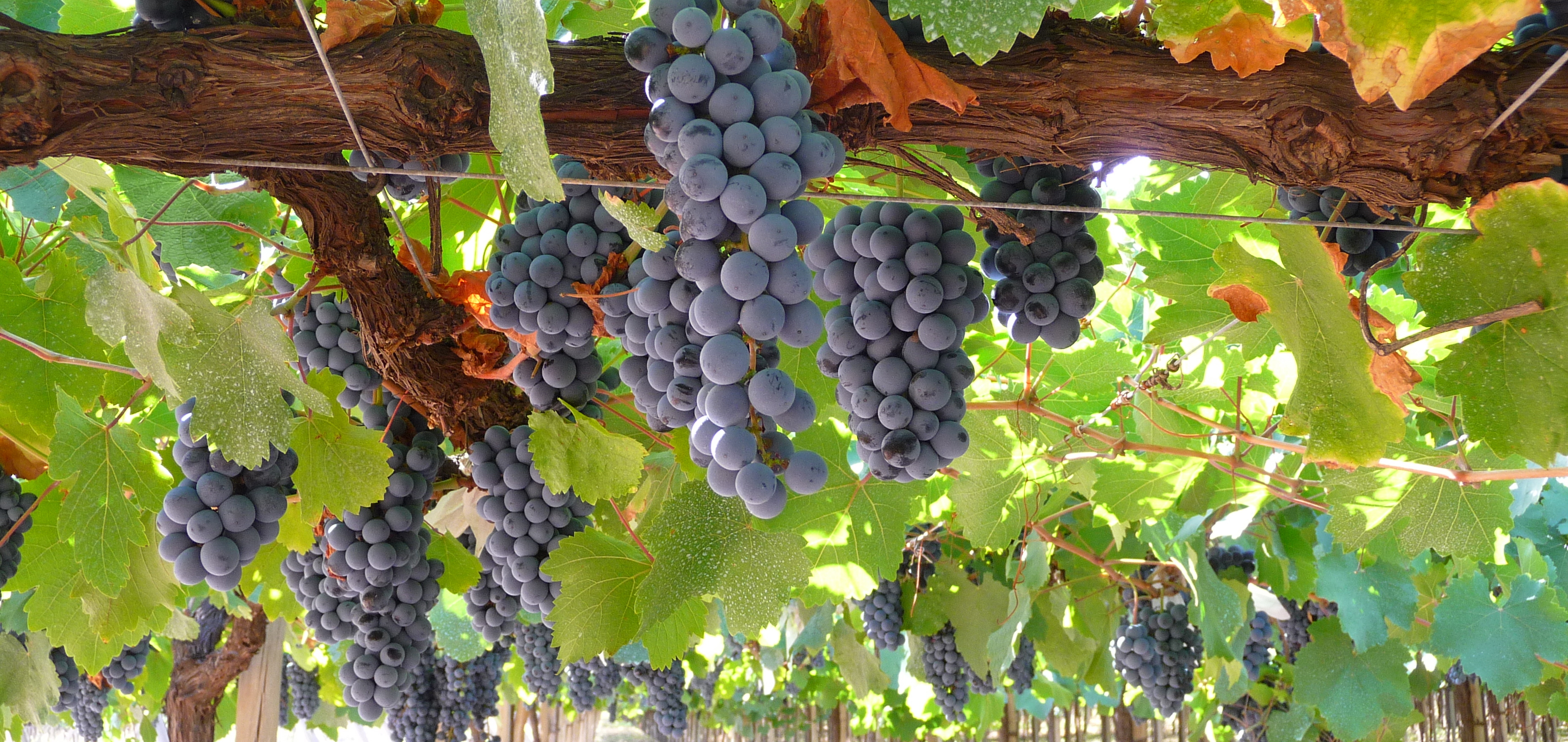 Viña Tamaya Winery
