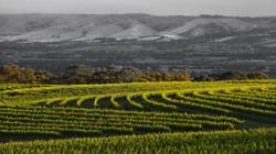 Nick Haselgrove Wines