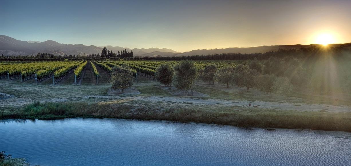 Omaka Springs Winery