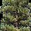 Thumbnail: Texturas de Árvores