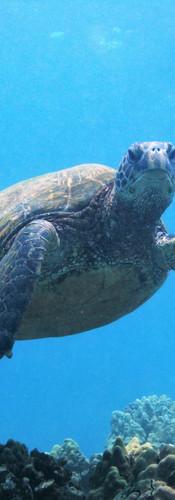 Turtle 7.JPG