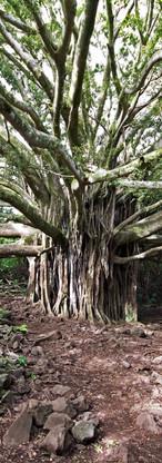 Tree 7 sacred pools.jpg