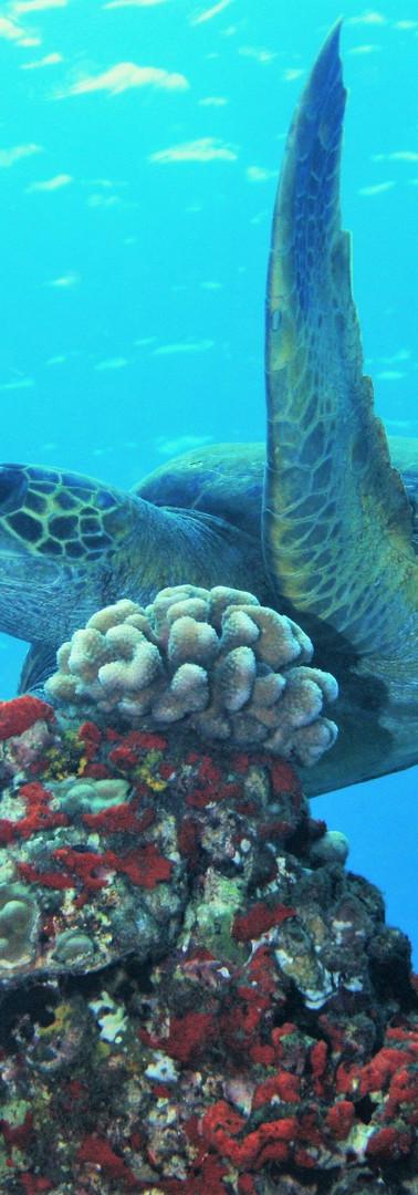 Turtle 5.JPG