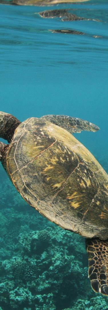 Turtle 12.JPG