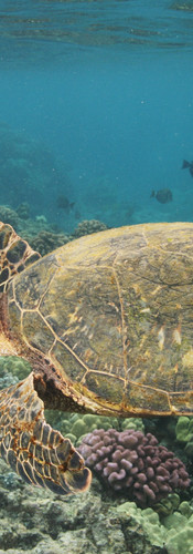 Turtle 11.JPG