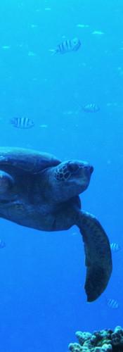 Turtle 6.JPG