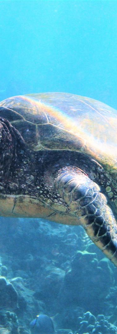 Turtle 9.JPG
