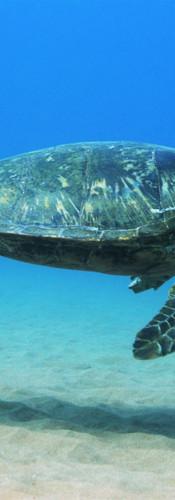 Turtle 2.JPG