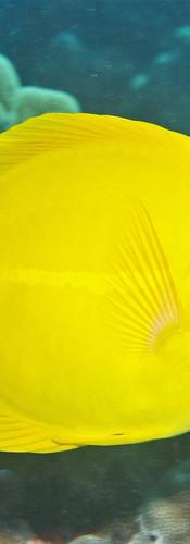 Yellow Tamg.jpg
