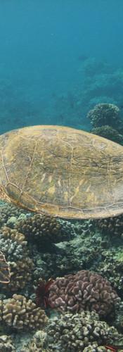 Turtle 10.JPG