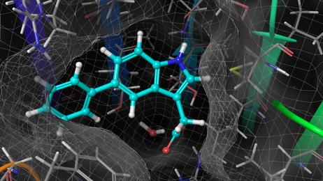 Uchida, N., Takahashi, K., Iwasaki, R., Zhang, H., Endo, T.A., Kimura, S., Yamada, R., Yoshimura, M., Tada, Y., Kinoshita, T., Itami, K., *Hagihara, S., and *Torii, K.U.  (2018) Chemical hijacking of auxin signaling with an engineered auxin-TIR1 pair. Nature Chemical Biology 14: 299-305