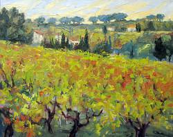 Amongst the Vines