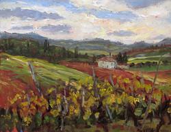 Vigneto di Toscana 1