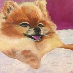 Daisy My Pomeranian