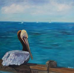 pelicansandiego