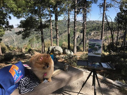 On top of #MountLemmon with my dog Daisy