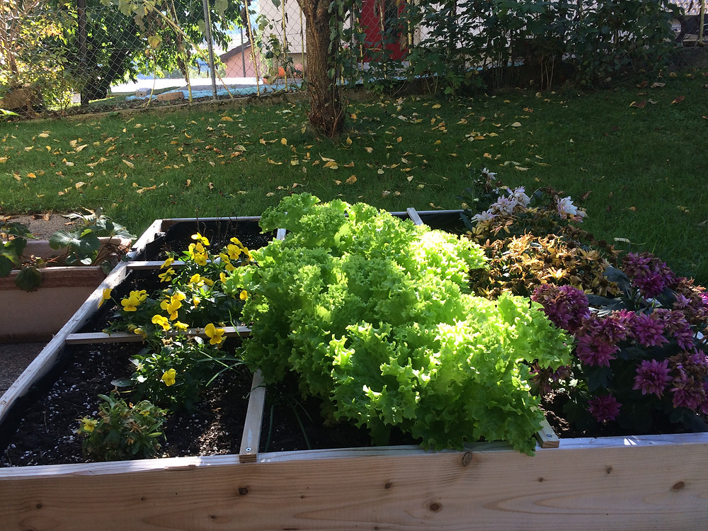 Quadratgarten im Herbst