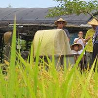 幸福旅程 農藝復興01.jpg