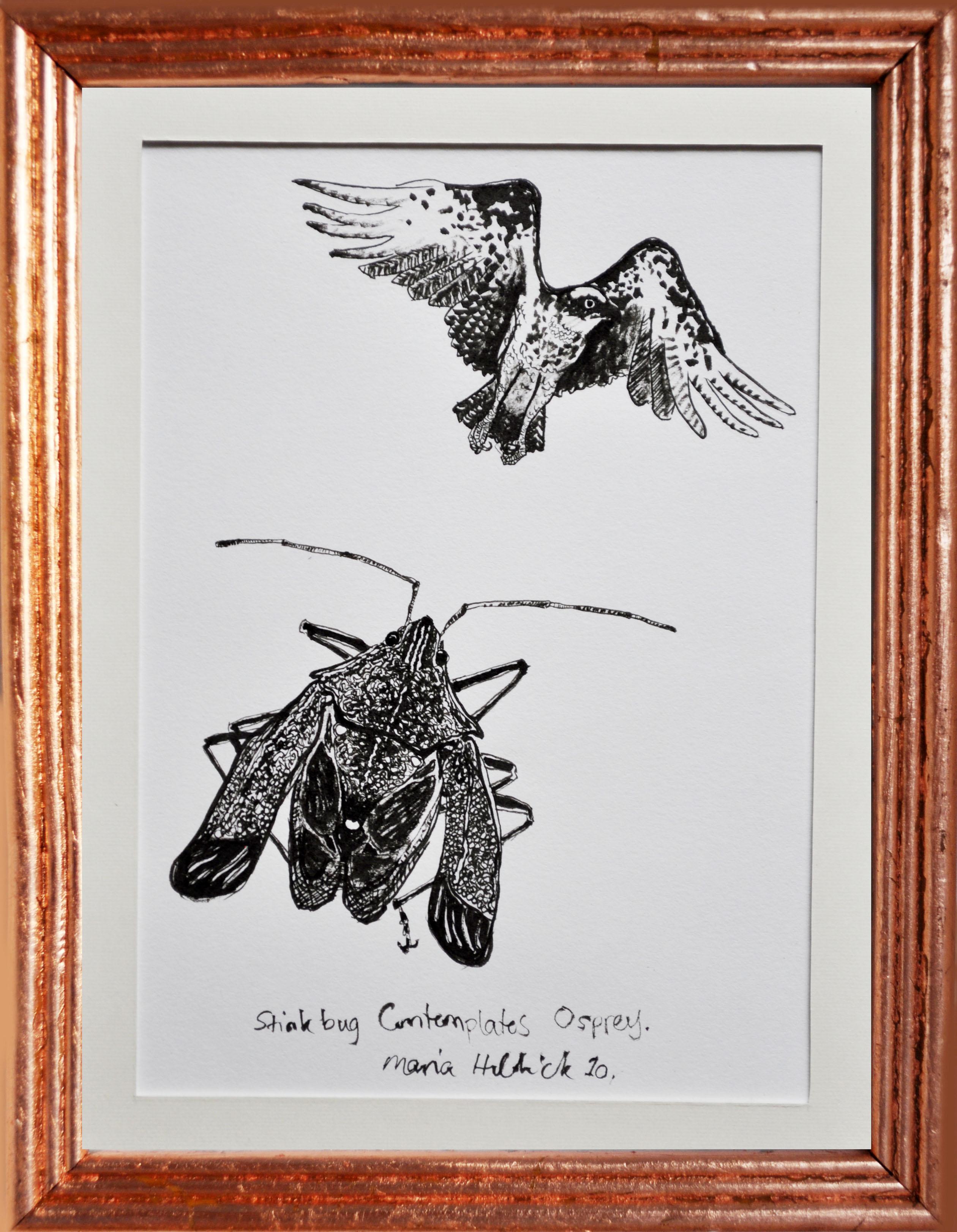 Stink Bug Contemplates Osprey