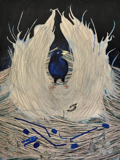 Bowerbird I, 2013