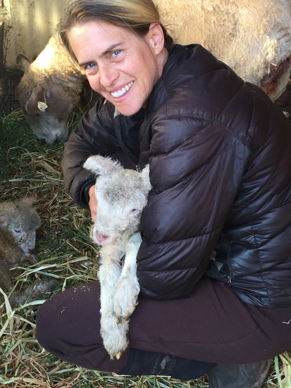 Baby Lambs are here!