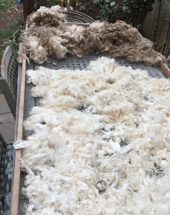 Wool Washing