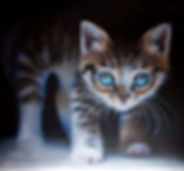 Kitten in the dark.jpg