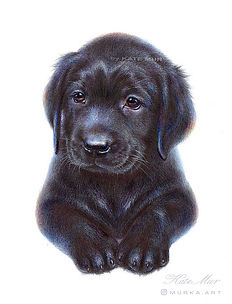 Black Labrador Puppy.jpg