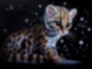 Ocelot Kitten.jpg