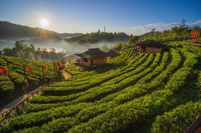 tea-plantation-nature-mountains-ban-rak-