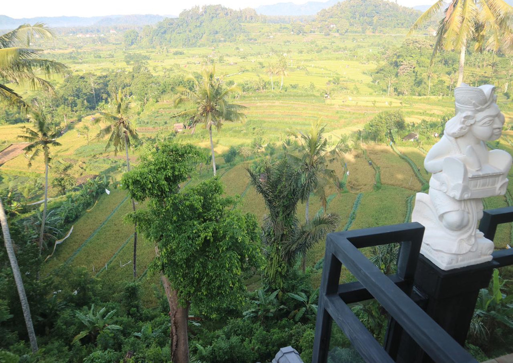 beautiful view of the rice fields.