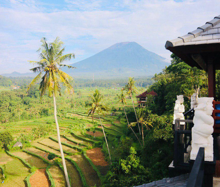View of rice fields and Mt. Agung.