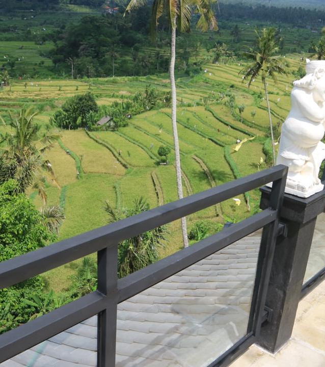 View of the beautiful rice fields.
