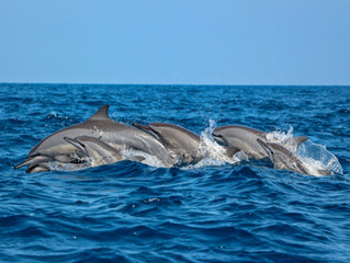 Dolphin Watching in Sri Lanka: Snaps from Our Recent Trip