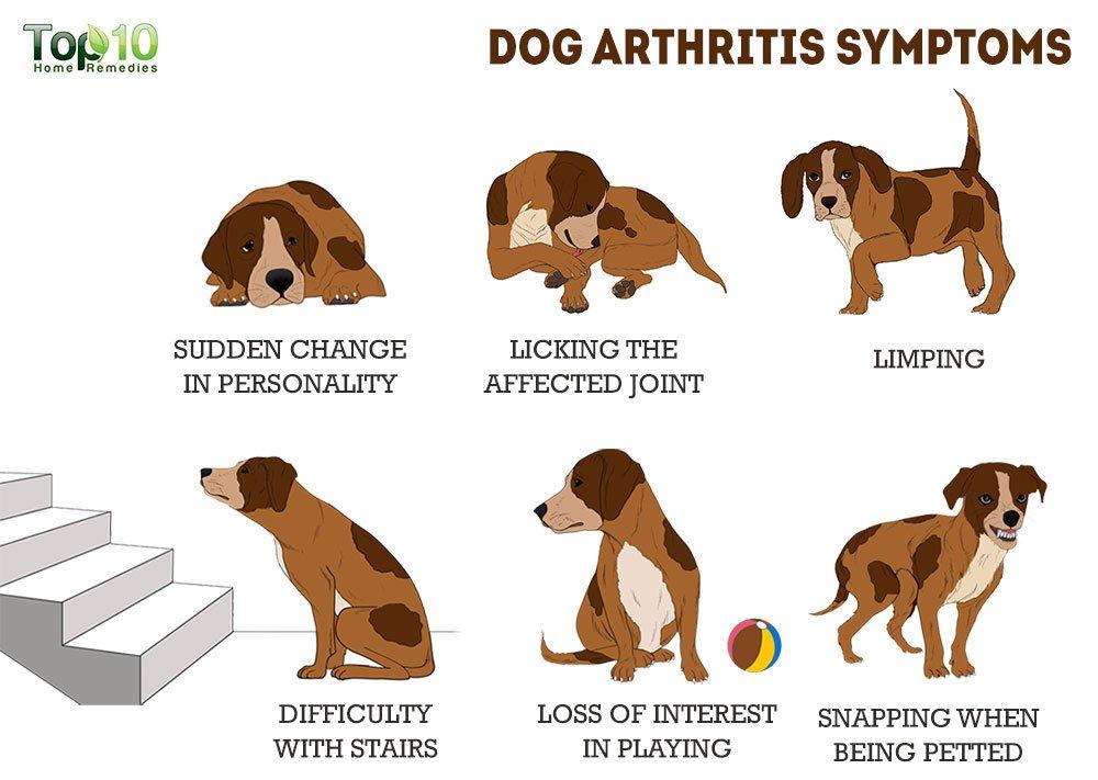 Types of Arthritis   Types of arthritis, Arthritis, Rheumatoid arthritis diet