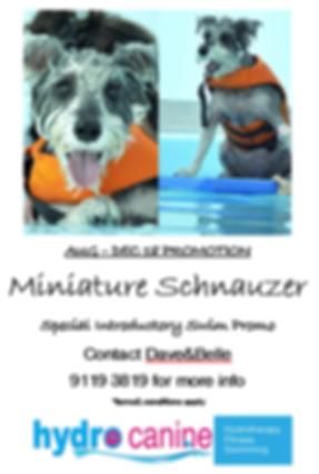 M Schnauzer Promo.png