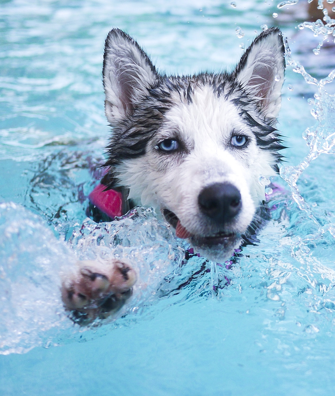 Dog Swimming Dog Hydrotherapy Hydro Canine I Singapore