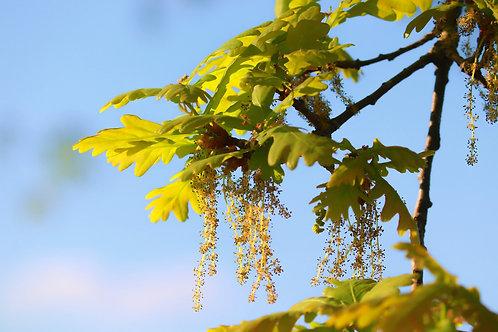 Bach-Blüten Mischung 5: Erschöpfung