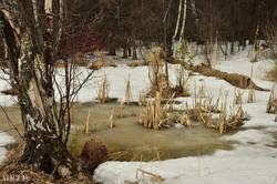 Природа после зимы