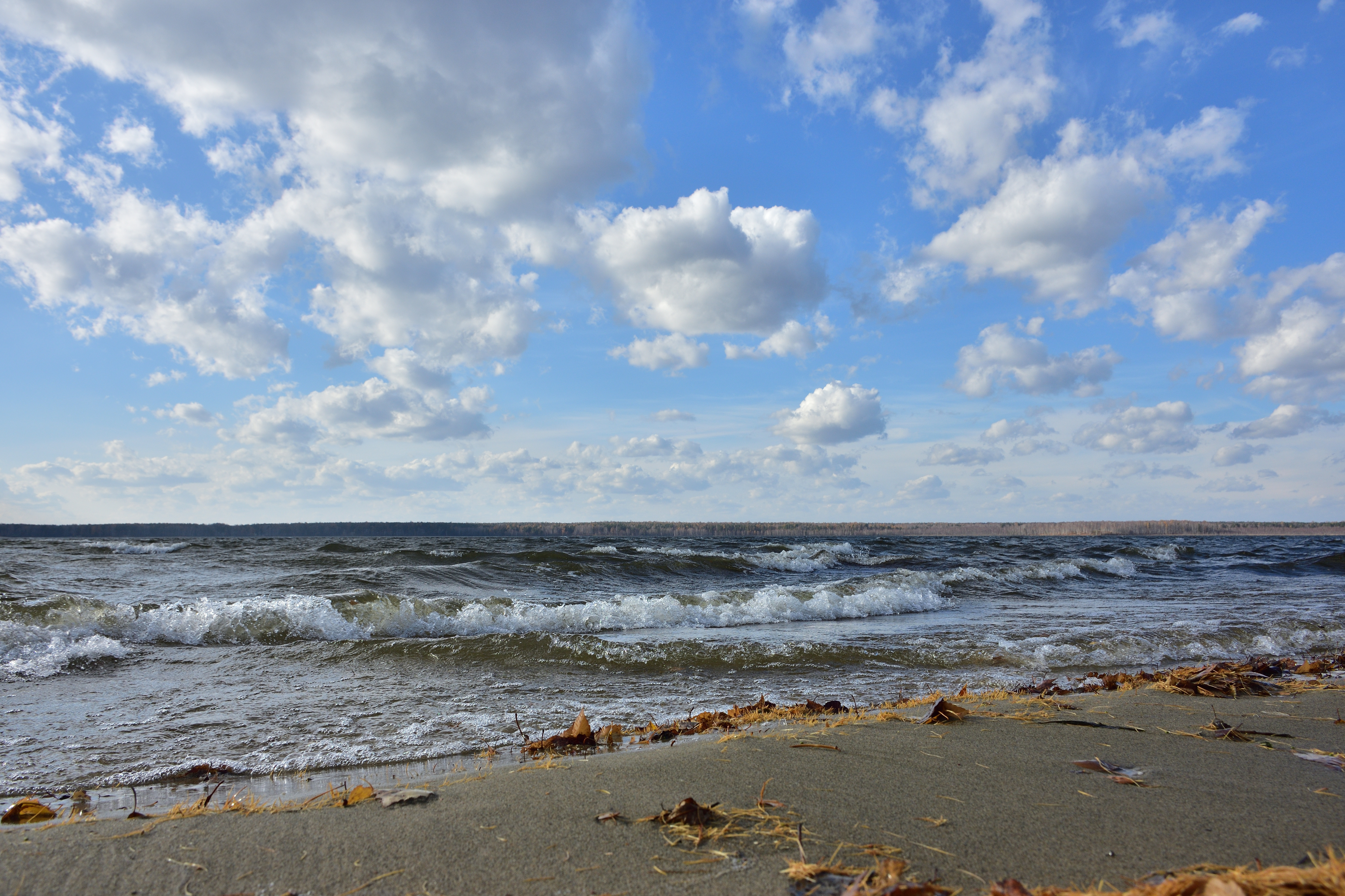 Восточный ветер