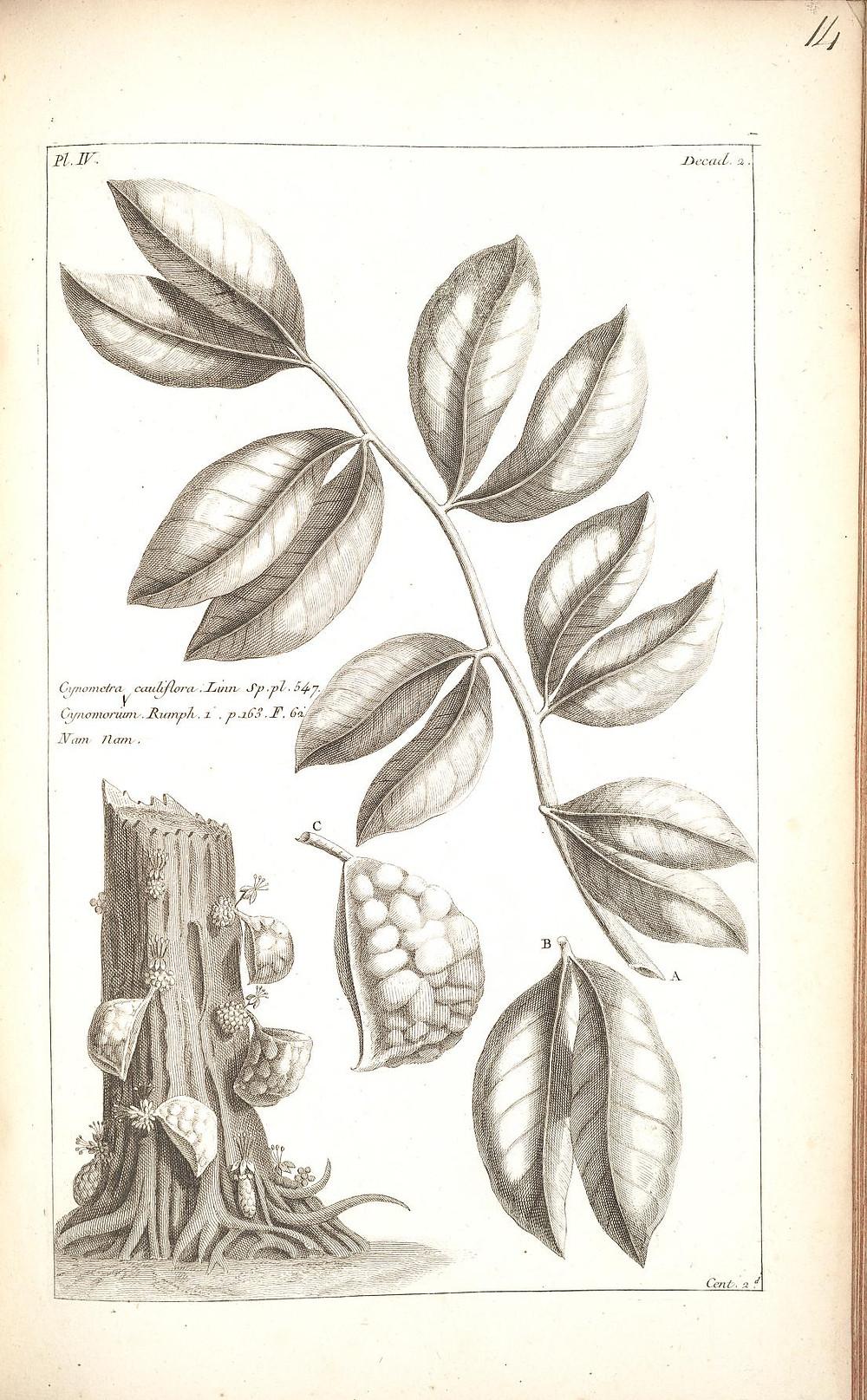 Histoire Universelle, Vol. 2, Chap 2, Paris: Brunet,1775-1778