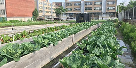 Farm-2-1140x570.jpg