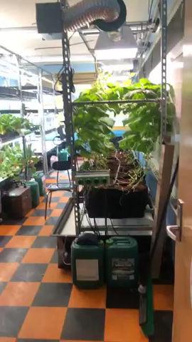 A Farm grows in Brooklyn
