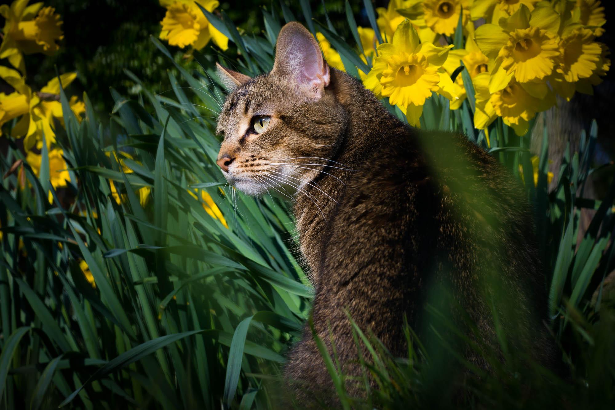 Timotea&yellowflowers